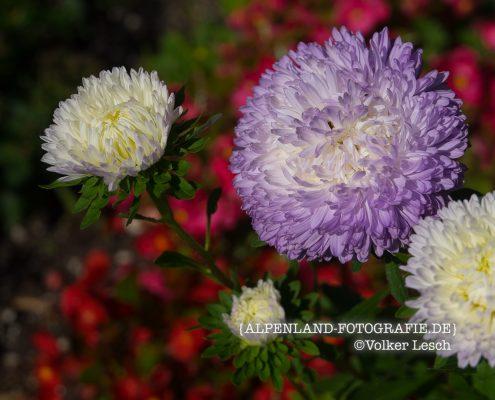 Blumen am Mountainfloat
