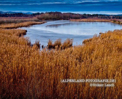 Ainringer Moos © Volker Lesch Alpenland Fotografie