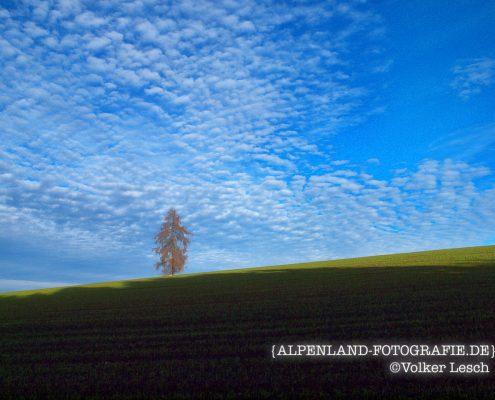 Ainringer Moos © Volker Lesch - Alpenland Fotografie